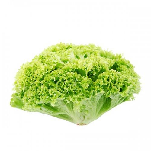 zelen-salat-lollo-biondo